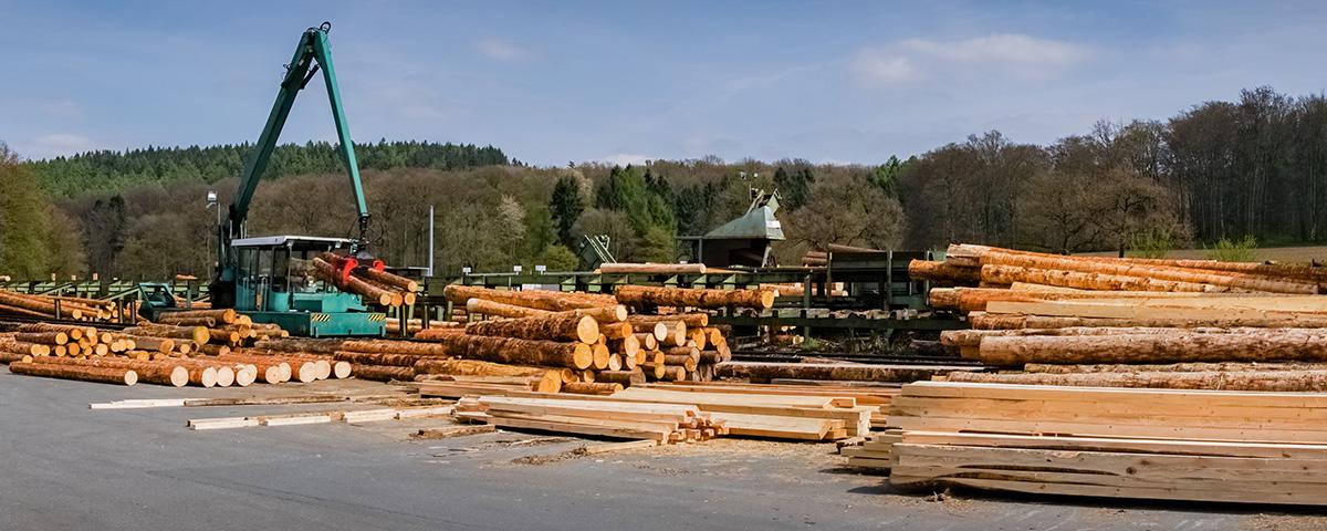 coc-zertiefizierung Sägewerk Holzstämme